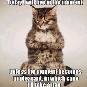 Funny Cute Fat Cat Funny Quotes ... ...