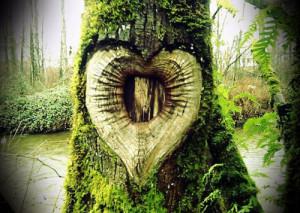 ... plant who plants a tree he plants the friend of sun and sky he plants