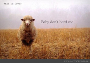 Funny Picture - Sheep baby dont herd me
