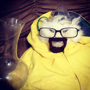 See a Cat Dressed Up As Breaking Bad 's Walter White
