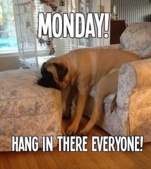 Monday dog