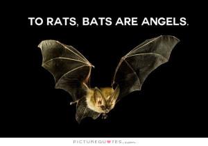Bat Quotes Rat Quotes