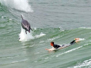 Funny Surfing Quotes http://www.glitters20.com/quotes/category/funny ...