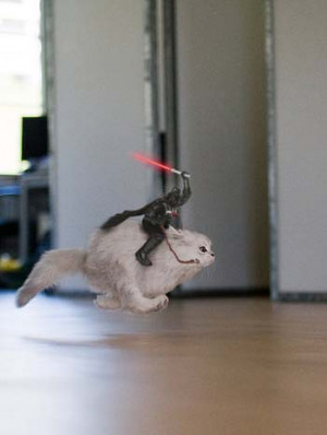 cat star wars