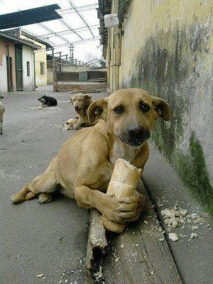 Stray Dog Is Happy To Get Some Bread Today