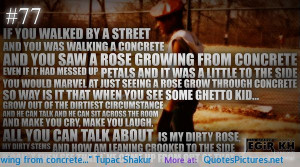 you-saw-a-rose-growing-from-concrete-tupac-shakur.jpg