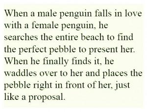 Penguin Love Quotes Emporer penguin love pebble