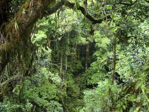 Amazon Rainforest Amazon