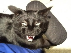 Filed Under Funny Yawning