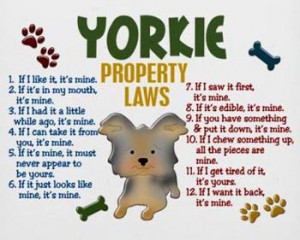 Funny yorkie pictures