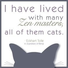tolle quote zen master cats more quotes zen google search cats zen ...