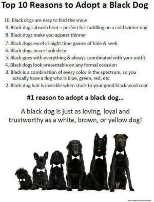 Reasons to adopt black dogs