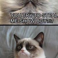 two-grumpy-cats-pic.jpg