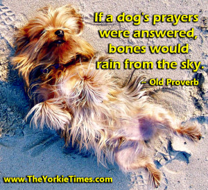 Yorkie With Quotes