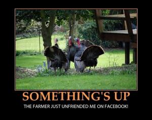 ... The farmer just unfriended me on Facebook - funny Thanksgiving turkeys