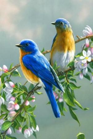 Singing Birds Live Wallapaper - screenshot