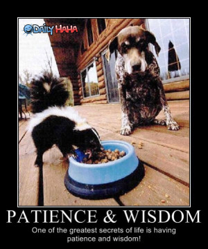 Patience_and_Wisdom_funny_picture