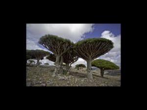 Conoce la isla encantada Socotra en Yemen FOTOS