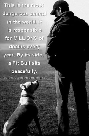 mortes todo ano Ao lado dele um pit bull senta se pacificamente