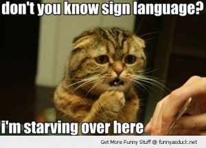 hungry cat animal lolcat sign language starving here sad funny pics ...
