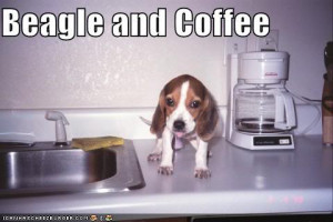 Funny Beagle Pictures on Funny Pictures Beagle Picture By ...