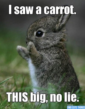 cute baby animals with quotes cute baby animals with quotes cute baby ...