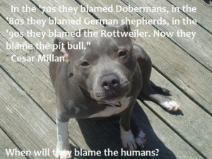 pit bull pictures and sayings. (Facebook.com) Inspirational pit bull ...