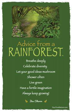 Advice from a Rainforest...not an animal, but a spiritual teacher ...