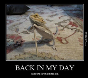 funny old lizard