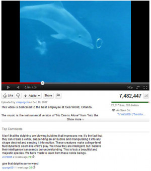 Funny photos funny youtube comments dolphin