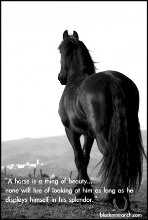 Be sure to check out the rest of our Horse Quotes and Cowgirl Quotes ...
