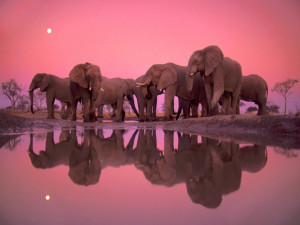 Image: Elephant Party wallpapers and stock photos