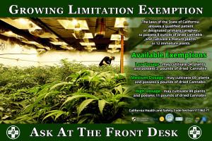 marijuana quotes hd wallpaper 10 marijuana quotes hd wallpapers hd ...