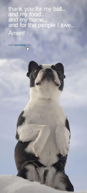 dog's prayer #spartadog #dogs #quotes