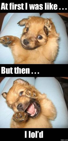 Puppies, Funny Dogs, Pets, Funny Stuff, Dogs Pictures, Funny Animal ...