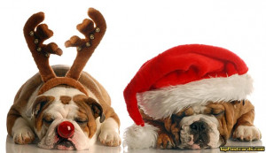 Animals - Animals - Christmas - Holidays - Animal, Animals, Pet, Pets ...