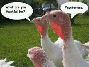 thanksgiving humor, vegetarians and turkeys