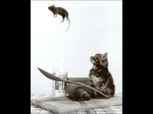 Cat and Mouse: Quotes