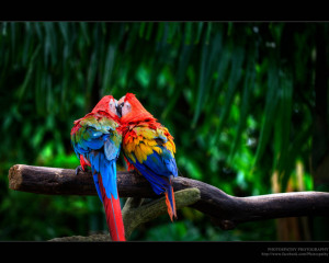 of colours parrot love we are having lots of fun parrot love by ...