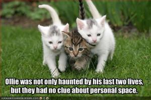 random funny cats