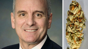 mark dayton marijuana