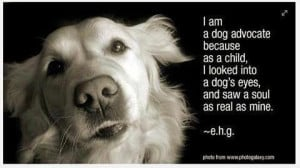 Rescue Dog Quotes