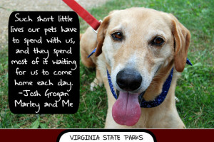 National Dog Day: 5 Dog Quotes to Celebrate Your Pooch | InvestorPlace