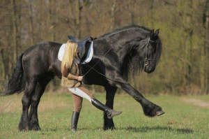 Photo: Girl and her horse training together