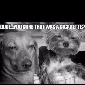 Funny Quote From Cheech And Chong