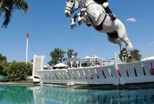 show jumping quotes / by Ally Penic
