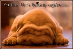 Don't you love the wrinkles?!