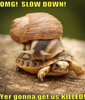 ... funny and tagged animals fails funny animals funny animals images