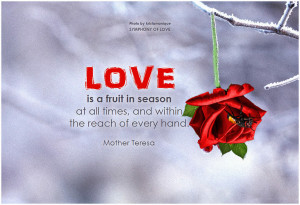Red Rose Wallpaper With Love Quotes Beautiful Red Roses hd Wallpapers