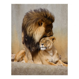 male_and_female_lion_in_love_poster-rd0d9d42e8ba845e1a35dcf39a1bc3c57 ...